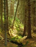 Shaded Forest. Glenmore Forest, Scotland - part of the Cairngorm National Park Stock Image