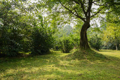 Shaded grassy lawn under aged tree on sunny day Stock Photo