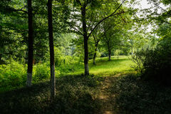 Shaded grassy lawn in woods of sunny summer morning Stock Photos