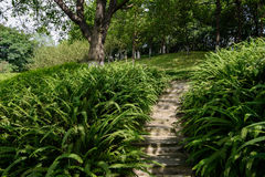 Shaded hillside stone stairway in ferns on sunny day Royalty Free Stock Photos