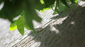 Shaded Lizard stock photo