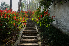 Shaded mountainside steps in flowers on sunny day Royalty Free Stock Images