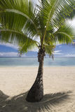 Shaded palm tree on tropical sandy beach. Aitutaki Royalty Free Stock Photography