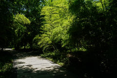 Shaded path in bamboo of sunny summer Royalty Free Stock Photography