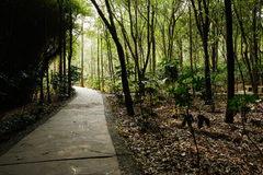 Shaded path in woods of sunny spirng Royalty Free Stock Images