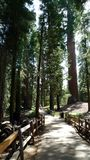 Shaded Pathway in Sequoia National Park Stock Image