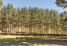 Shaded picnic area at Golden Gate in the Free State Royalty Free Stock Photography