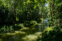 Shaded river in woods of sunny summer Stock Images