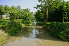 Shaded river in woods of sunny summer morning Royalty Free Stock Photos