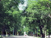 Shaded  road. Driving thru town on the main highway Royalty Free Stock Photo