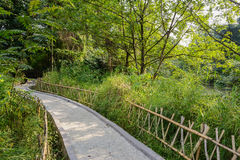 Shaded sinuous footpath on sunny day Stock Photo