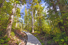 Shaded trail in a Coastal Forest Stock Image