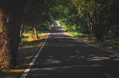 Shaded trees of road Royalty Free Stock Images