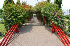 Shaded walkway under a pergola of bougainvillea Royalty Free Stock Photo