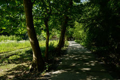 Shaded way in sunny summer afternoon Royalty Free Stock Photography