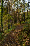 Shaded Woodland Walk Royalty Free Stock Image