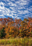 Shades of Autumn Stock Image
