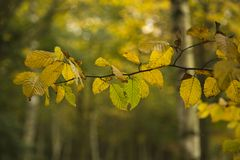 Shades of Autumn Stock Photography