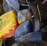 Shades of autumn decay Stock Images