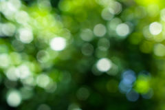 Shades of defocused natural green leaves and white light bokeh b. Shades of beautiful defocused natural green leaves and white light bokeh background royalty free stock photo
