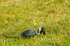 Shades in grass Stock Photo