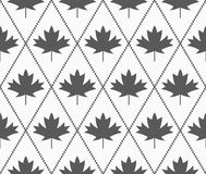 Shades of gray maple leaves Royalty Free Stock Images