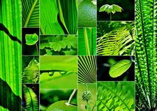 Shades of green collage Royalty Free Stock Image