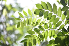 Shades of Green - leaves. In Nature stock photos