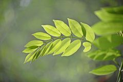 Shades of Green - leaves Stock Photo
