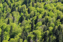 Shades of Green. A mountain forest during spring shows off its various shades of green. From the fresh light-green leaves to the darker coniferous ones. Fifty royalty free stock photography