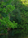 Shades of Green. A photograph of various shades of green trees above a small lake Stock Image