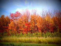 Shades of orange in an autumn scene of changing color leaves on trees. Red orange leafs against a blue sky and green and yellow field - a rainbow of color stock photography