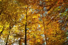 Shades of orange in forest at fall stock photography