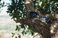 Shades on a Shady Branch. A pair of of sunglasses resting on a branch in the shade Royalty Free Stock Images