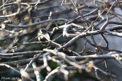 Shados mellan träd arkivfoto