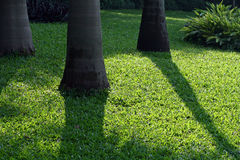 Shadow. Of palm trees on lawn Royalty Free Stock Image