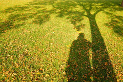 Shadow. In the autumn lawn Stock Photos