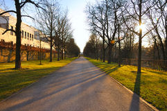 Shadow alley in early spring in Stadtschloss park Stock Photos