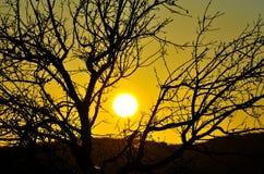 Shadow of almond tree on intense morning sun Stock Photo