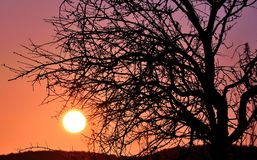 Shadow of almond tree on intense sun at dawn Stock Photo