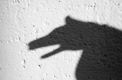 Shadow of animal. On the wall Stock Photos