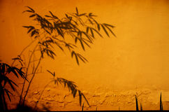 A shadow of bamboo. Bamboo shadow on the wall Stock Photos