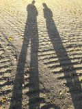 Shadow in barley fields in the autumn in central europe with large sun. Strokes royalty free stock images