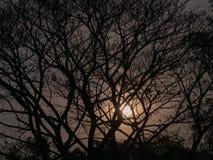 Shadow Big Tree Behind The Sun Shine. The Shadow Big Tree Behind The Sun Shine Stock Image