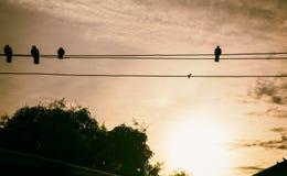 Shadow Bird Island Wire The sun sets. Retro style tone Stock Photo