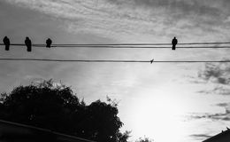 Shadow Bird Island Wire The sun sets Stock Images