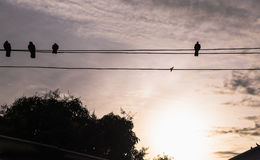 Shadow Bird Island Wire The sun sets Royalty Free Stock Photo