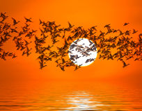 Shadow of an bird migrating ducks  silhouette Stock Photography