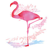 Shadow blob with Flamingo Royalty Free Stock Photos