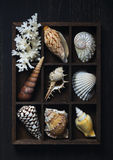 Shadow box with collection of sea shells Stock Photography